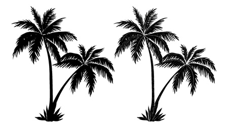Tropical palm trees, black silhouettes and outline contours on white background
