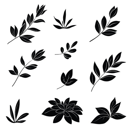 foliage: Leaves of various plants, set black silhouettes on white background   illustration