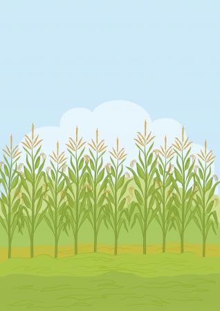 mais: Landwirtschaftliche Landschaft im l�ndlichen Raum, Feld mit gr�nem Mais Vector illustration