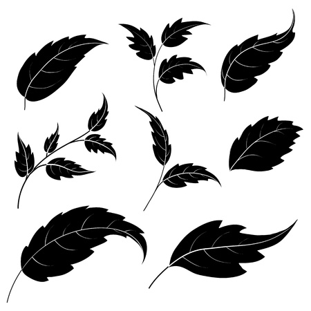 Set of leaves of plants and trees, black silhouettes on white background  Vector