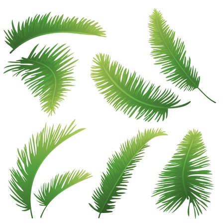 tropical evergreen forest: Set green branches with leaves of palm trees on a white background  Drawn from life