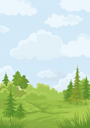 coniferous forest: Verano Paisaje verde bosque y azul cielo ilustración vectorial