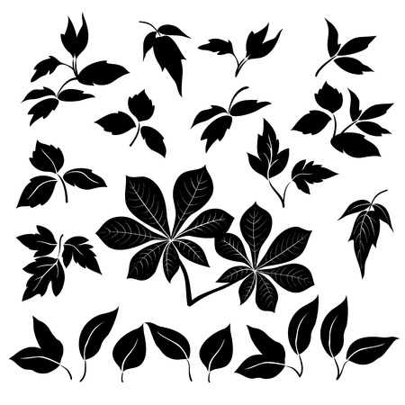Set of leaves of plants and trees, black silhouettes on white background Stock Vector - 18655901