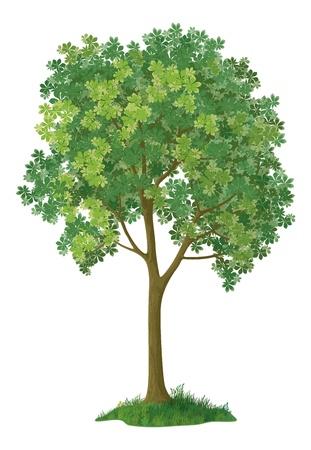 Kastanje groene boom, geïsoleerd op een witte achtergrond, bevat transparanten Vector