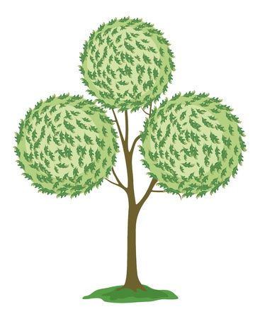 verdure: Abstract green tree with round crown, isolated on white background  Vector