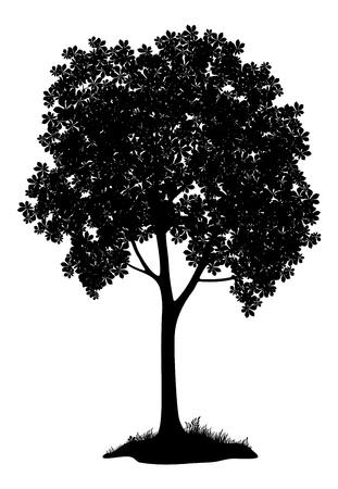 castaÑas: Castaño árbol, silueta en negro sobre fondo blanco Vector