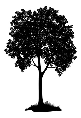 tree vertical: Chestnut tree, black silhouette on white background  Vector