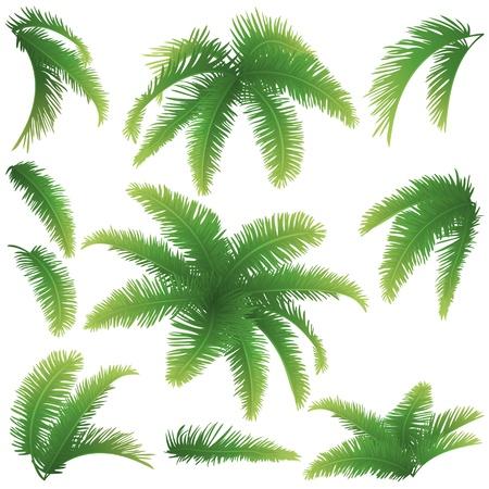 Set groene takken met bladeren van palmbomen op een witte achtergrond Getrokken uit het leven Stock Illustratie