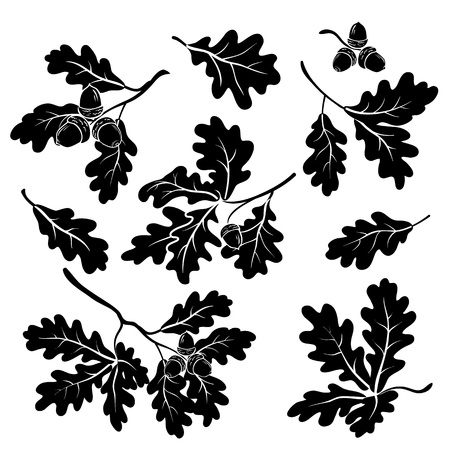 Set oak branches with leaves and acorns, black silhouettes on white background