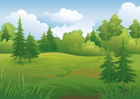 coniferous forest: Paisaje verde de verano los bosques y la ilustraci?ielo azul