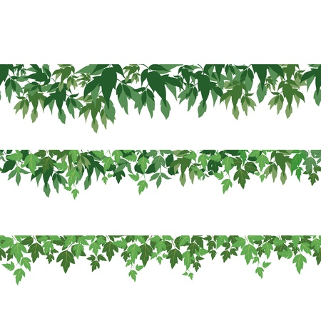 herbarium: Seamless pattern, maple green leaves, isolated on white background