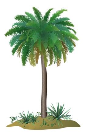 carribean: Palmera tropical con hojas verdes y las plantas en el fondo blanco. Vector Vectores