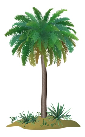 coco: Tropical palm tree with green leaves and plants on white background. Vector Illustration