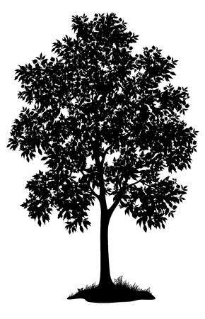 Maple tree with leaves and grass, black silhouette on white background  Vector Çizim