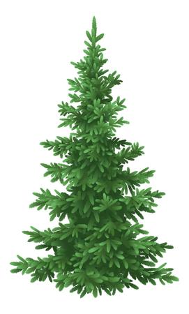 arbol de pino: Árbol de Navidad verde abeto Foto de archivo