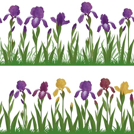 Set seamless of flowers iris, leaves and green grass, isolated on white background  Vector 向量圖像