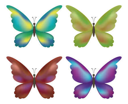 Set colorful butterflies with opened wings on white background. Vector Vector