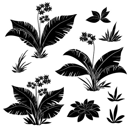 Set plants: flowers and grass, black contours isolated on white background. Vector Vector
