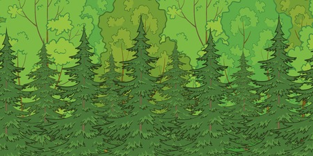 deciduous woodland: Seamless background, green summer forest with fir and deciduous trees. Vector