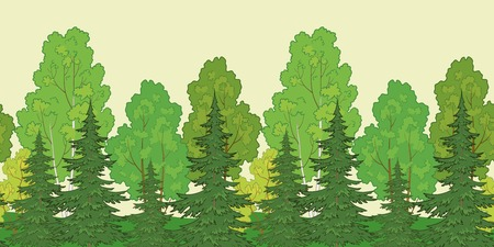 deciduous woodland: Seamless background, green summer forest with fir and birch trees. Vector