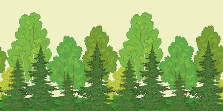 reforestaci�n: Sin problemas de fondo, el bosque de verano verde con abetos y abedules. Vector Vectores