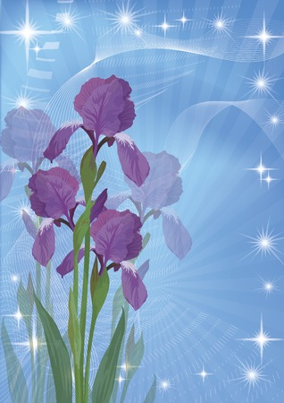 iridaceae: Flowers iris on abstract blue background, picture for holiday design
