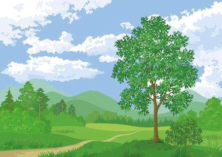 Landscape, summer green forest, maple tree and blue cloudy sky. Vector Illustration