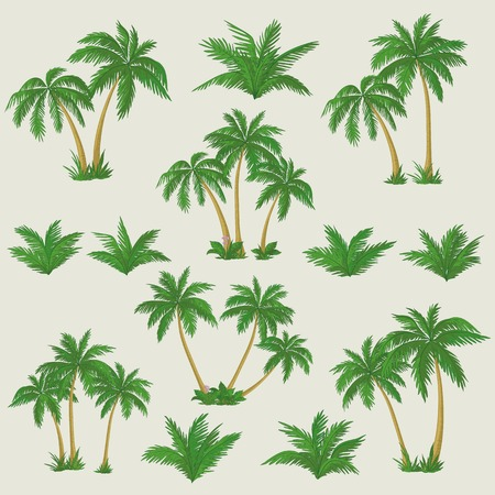 coconut: Set tropical palm trees with green leaves, mature and young plants  Vector