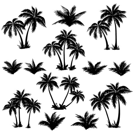 foliage frond: Set tropical palm trees with leaves, mature and young plants, black silhouettes isolated on white background  Vector