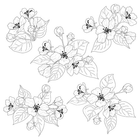 Apple tree flowers and leaves, set black contours isolated on white background   Illustration