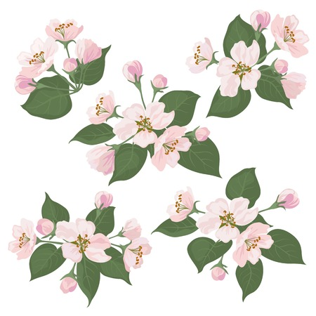 Pink apple tree flowers and green leaves