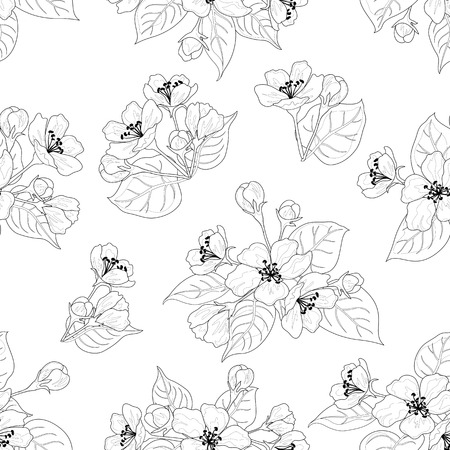 Seamless floral pattern, apple tree flowers, set black contours isolated on white background  Vector Vector