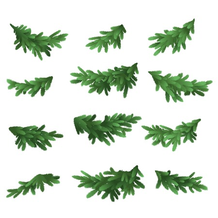 verdure: Christmas tree green branches set isolated on white background  Vector