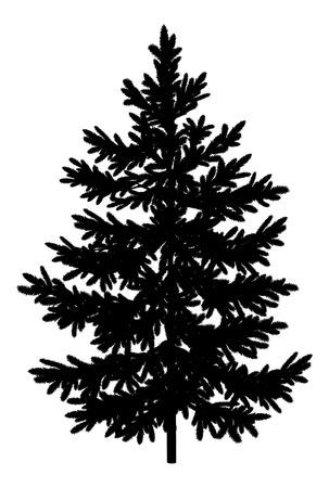 arbol de pino: Abeto de Navidad árbol de abeto de la silueta en negro sobre fondo blanco Vector
