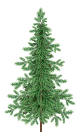christmastree: Green Christmas spruce fir tree isolated on white background.