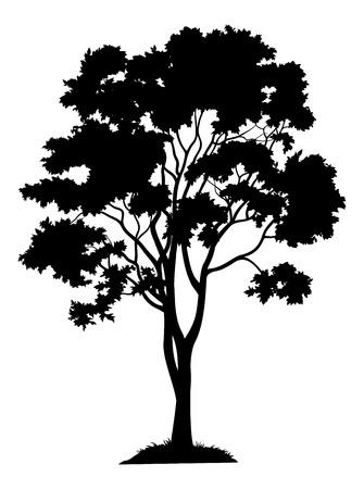 Esdoorn boom met bladeren en gras, zwart silhouet op een witte achtergrond. Vector