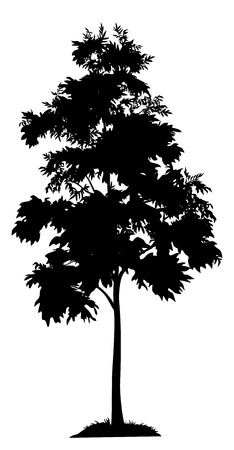 reforestation: Acacia tree with leaves and grass, black silhouette on white background. Vector