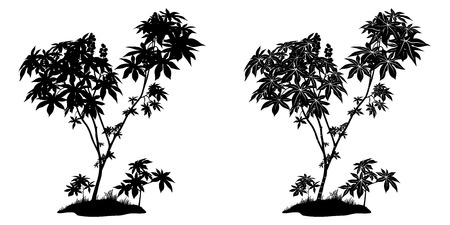 cathartic: Castor Plant with Leaves, Fruits and Grass Black Contours and Silhouette Isolated on White Background Illustration
