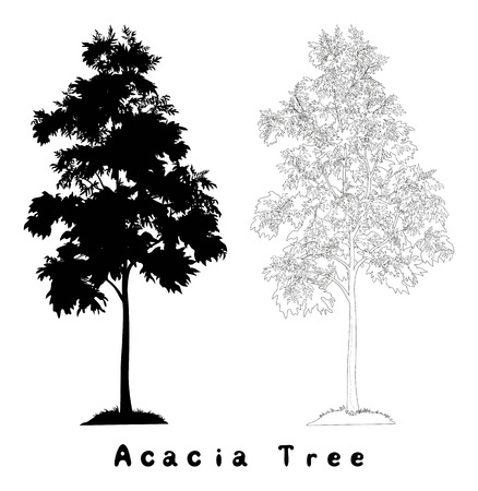 tree crown: Acacia tree with leaves and grass, black silhouette, contours and inscriptions on white background. Vector Illustration