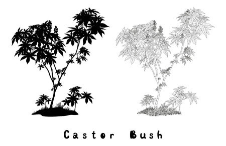 cathartic: Castor Plant with Leaves, Fruits and Grass Black Contours, Silhouette and Inscriptions Isolated on White Background. Vector Illustration