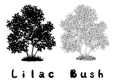 reforestaci�n: Lila Bush con las hojas y la hierba Negro Silueta, contornos y Inscripciones aisladas sobre fondo blanco. Vector