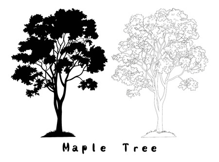 Maple Tree with Leaves and Grass Black Silhouette, Contours and Inscriptions Isolated on White Background. Vector