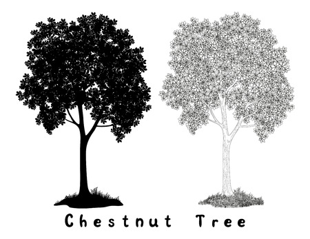 Chestnut tree Black Silhouette, Contours and Inscriptions Isolated on White Background. Vector