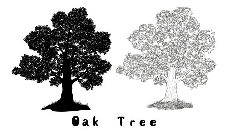 Oak Tree with Leaves and Grass Black Silhouette, Contours and Inscriptions Isolated on White Background. Vector Illustration