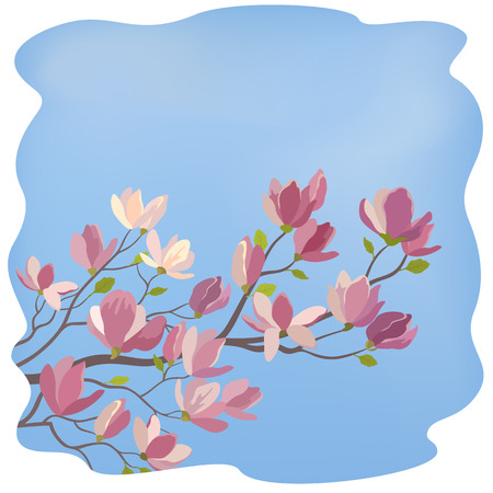 magnolia tree: Spring Magnolia Tree Branch with Flowers and Green Leaves Against The Blue Sky. Vector