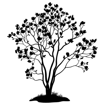 Spring Magnolia Tree with Flowers, Leaves and Grass Black Silhouette Isolated on White Background. Vector