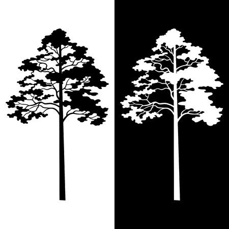 arbol de pino: Pine Trees Blanco y Negro siluetas aisladas en el fondo. Vector