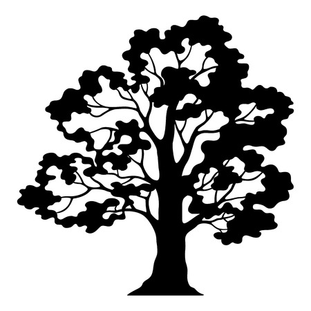 tree silhouettes: Oak Tree Pictogram, Black Silhouette and Contours Isolated on White Background. Vector