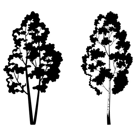 birch bark: Trees, birch and symbolic black silhouette isolated on white background. Vector Illustration