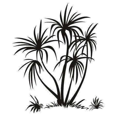 arboles blanco y negro: Palmeras tropicales y Grass, Pictogramas, siluetas negras aisladas en el fondo blanco. Vector